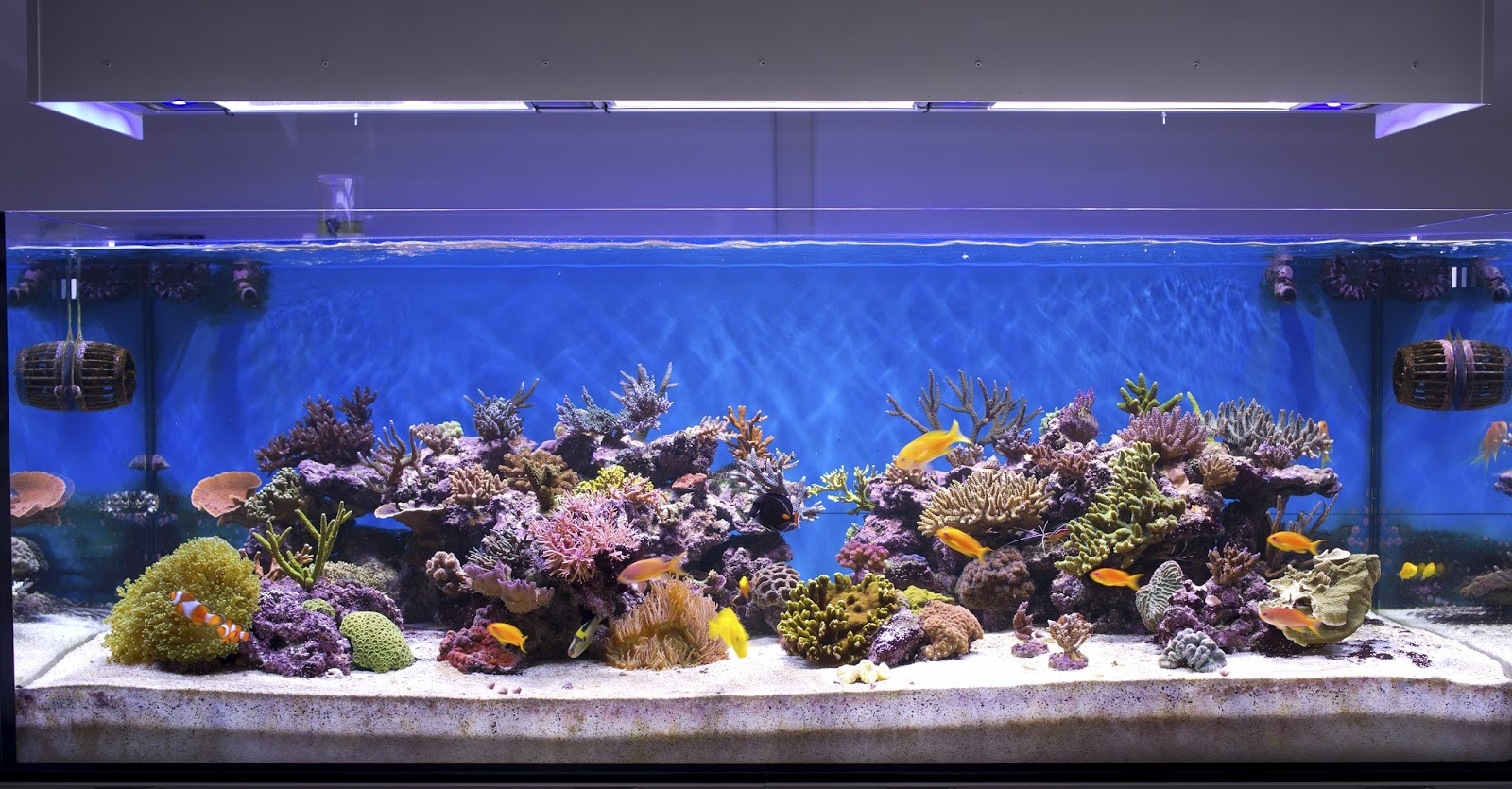 Fish aquarium price in bangalore - Maintaining A Clean Aquarium