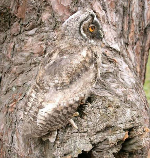 Best Animal Camouflage Picture - 33