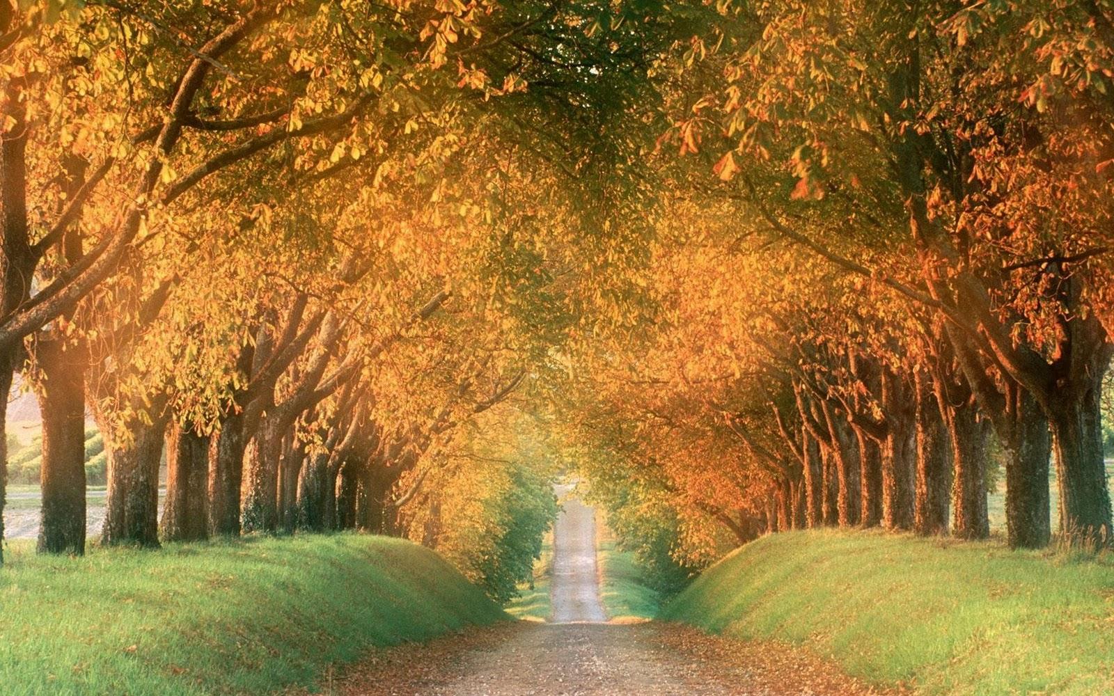 http://1.bp.blogspot.com/-HD8WlEcNYrk/Tu77fOQO1eI/AAAAAAAAB2Y/gfHMJaOxl2U/s1600/Best-Autumn-Photo-PC-Desktop-wallpapers-picture-HD-collection-17.jpeg