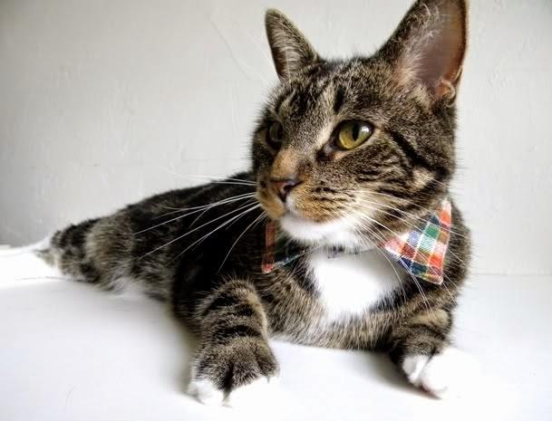 DIY Dapper Pet Collar