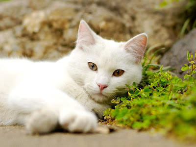 Cat Standard Resolution Wallpaper 33
