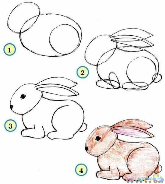 Cách Vẽ Hình 20 Thú vật Hết Sức Đơn Giản thỏ