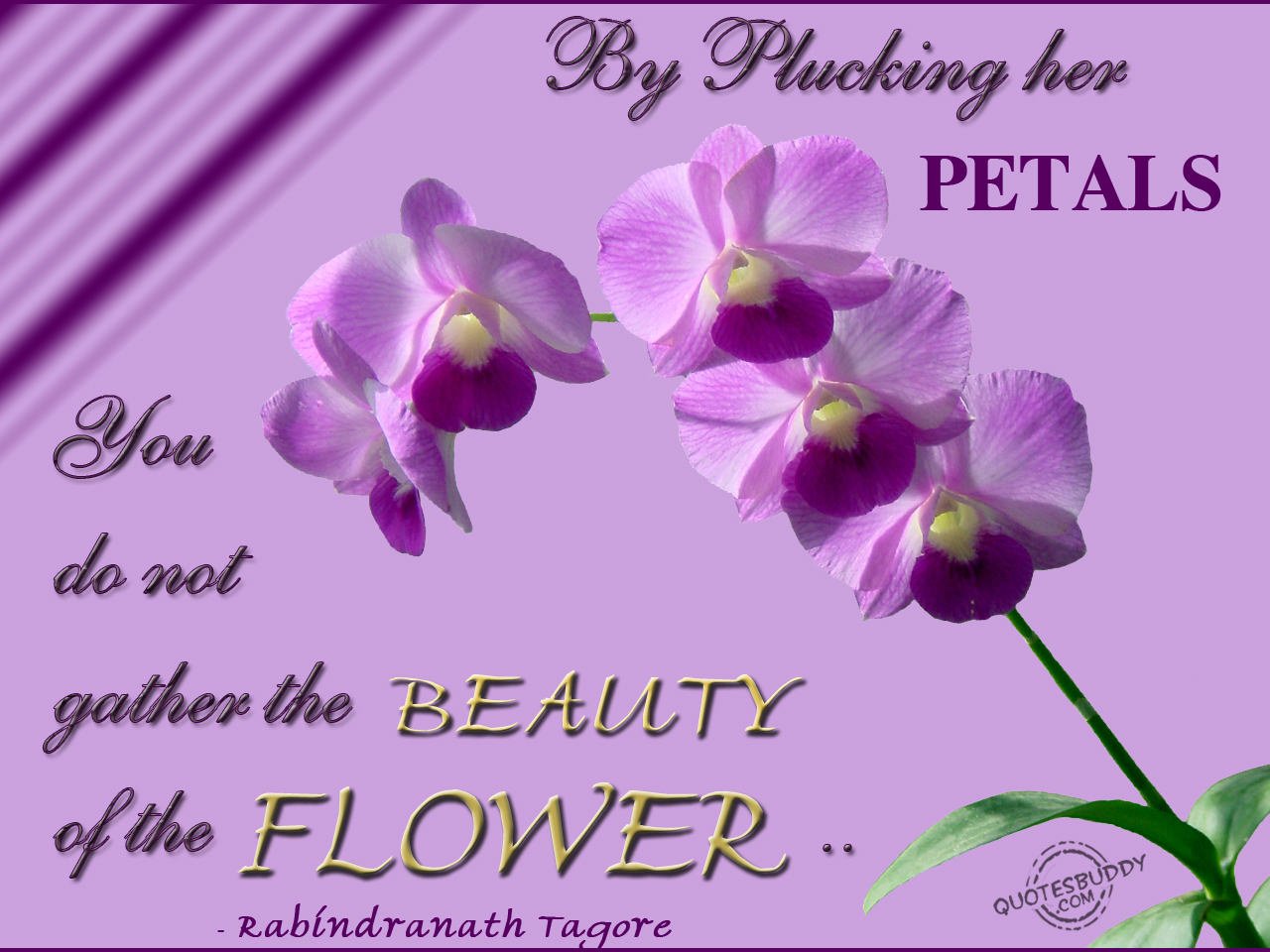 Wallpaper Life Beautiful Flower Quotes Pictures Picturesboss