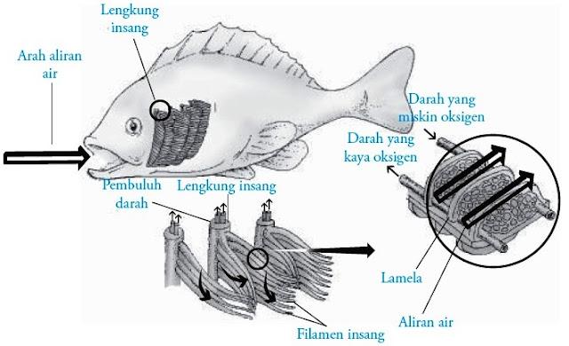 Sistem pernapasan ikan