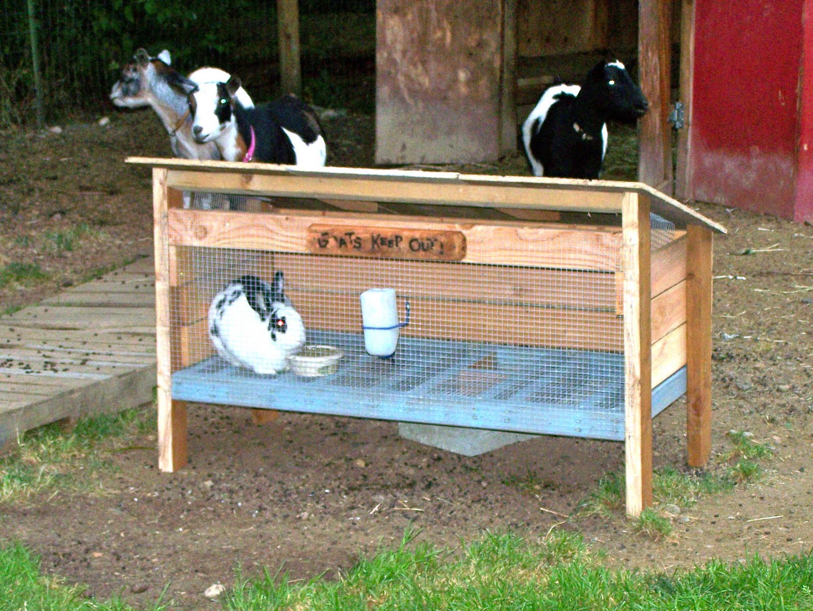 Rabbits on pinterest rabbit hutches rabbit cages and rabbit for Easy diy rabbit cage budget
