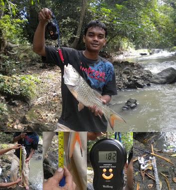 Saya dan ikan Hampala 1,8kg