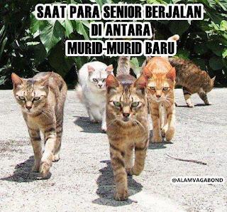 Saat Para Senior berjalan di depan murid -Murid Baru..!