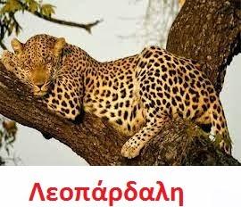 https://dl.dropboxusercontent.com/u/72794133/%CE%96%CE%A9%CE%91/leopard1.wav