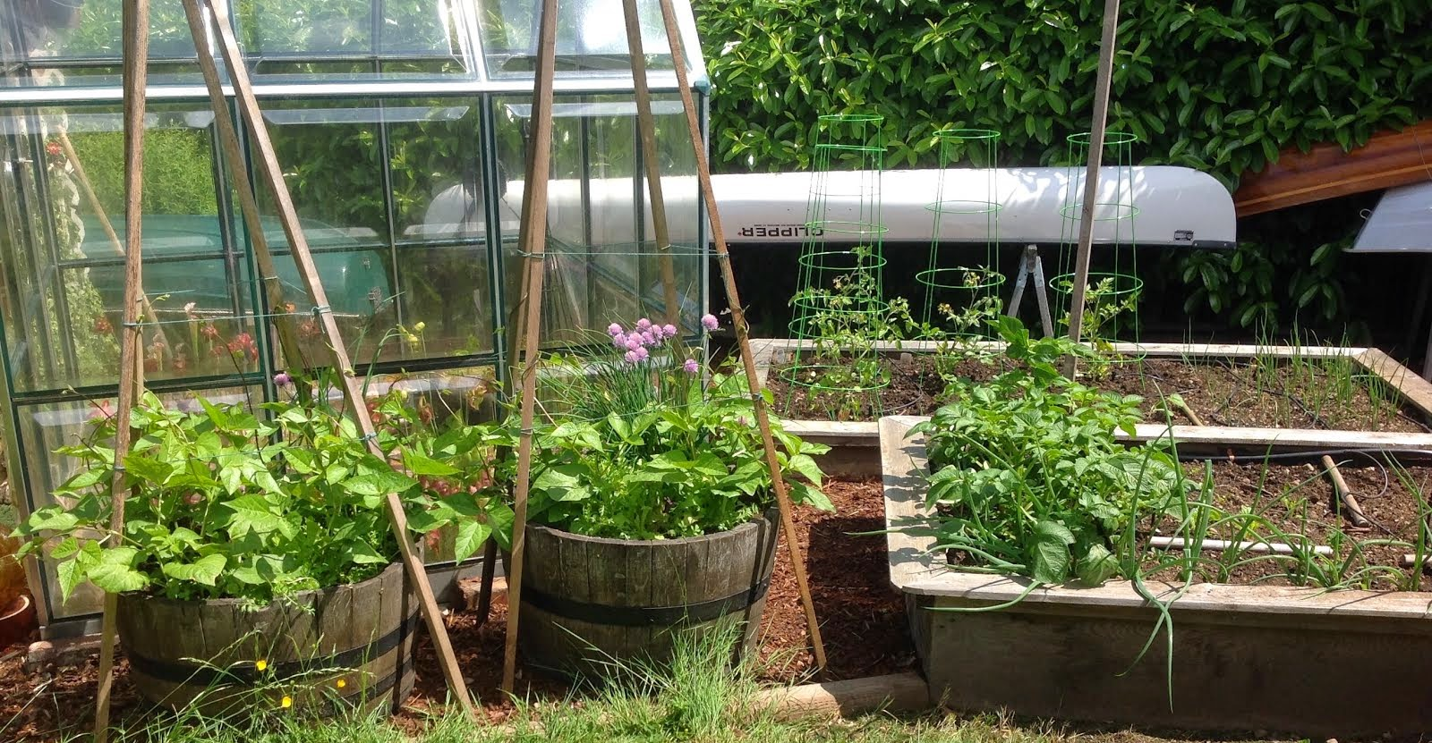 When I Moved To The Drake St. House In Town Four Years Ago, The Small  Backyard Was Dominated By A Large, Unkempt But Productive Vegetable Garden  ... The ...