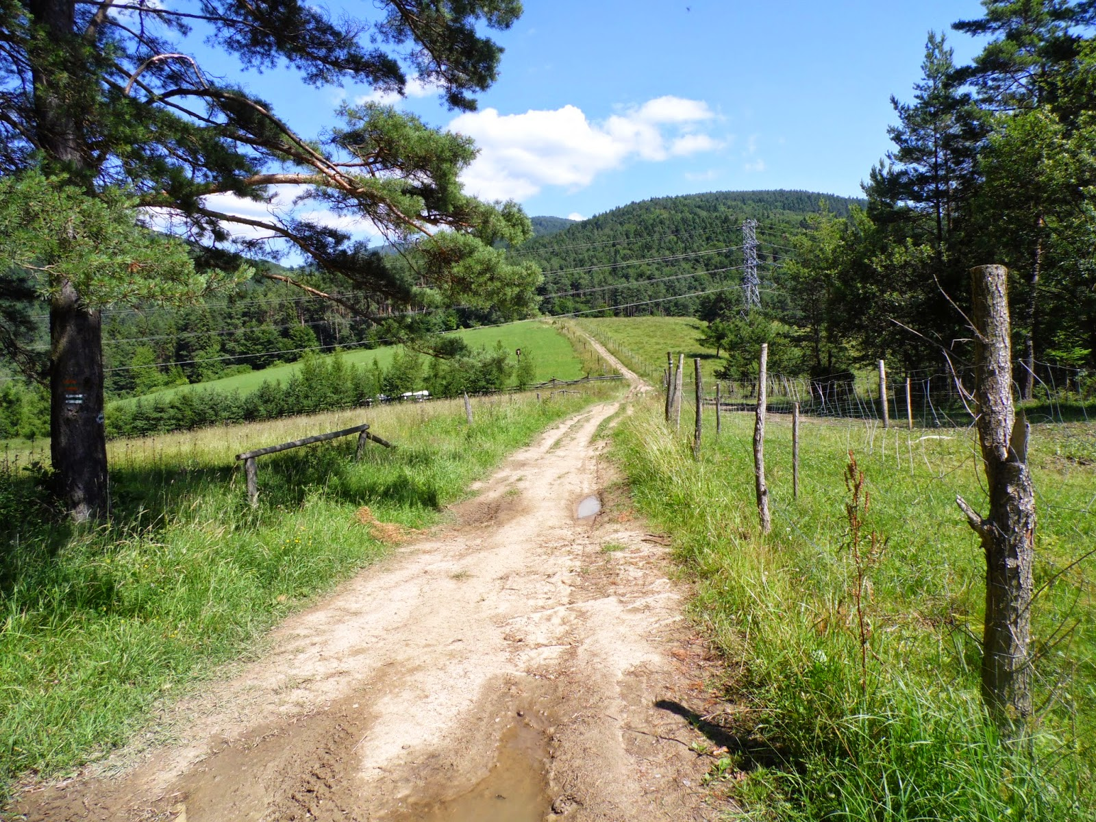 Krajobraz ze słupem w drodze z Muszyny na Jaworzynę Krynicką
