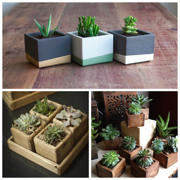 Decorando con cactus y suculentas una muy buena opci n for Cactus decoracion