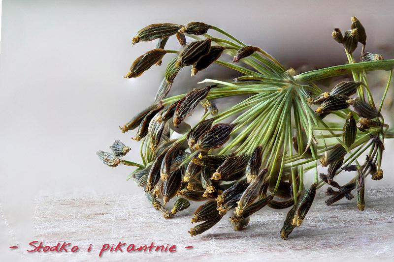 Nasiona kopru włoskiego z bliska