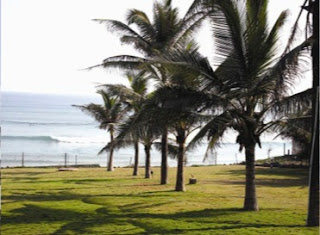 Gopalpur Palm Cocunut Trees, Gopalpur on Sea, Gopalpur Beach