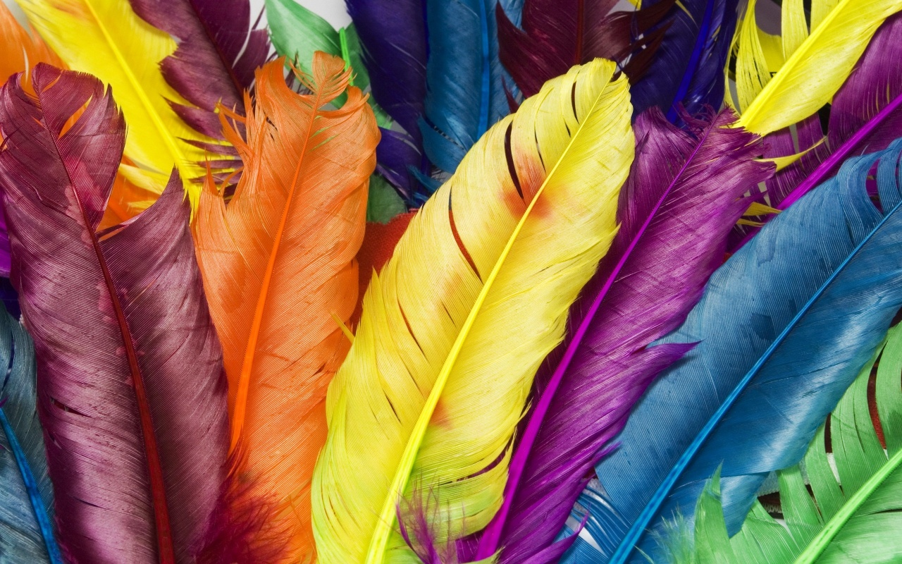 wallpaper feather download - photo #30
