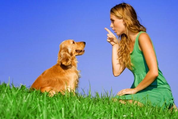 dog training career