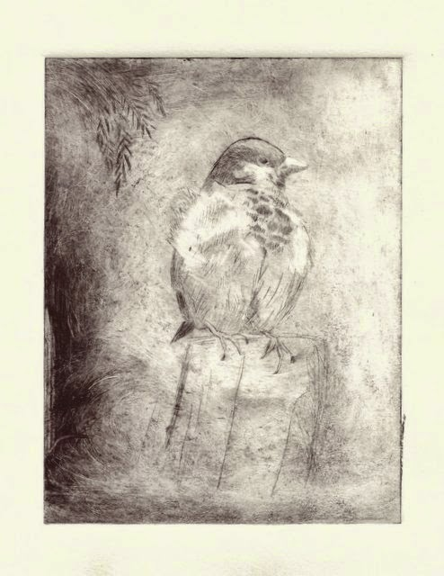 drypoint house sparrow printmaking