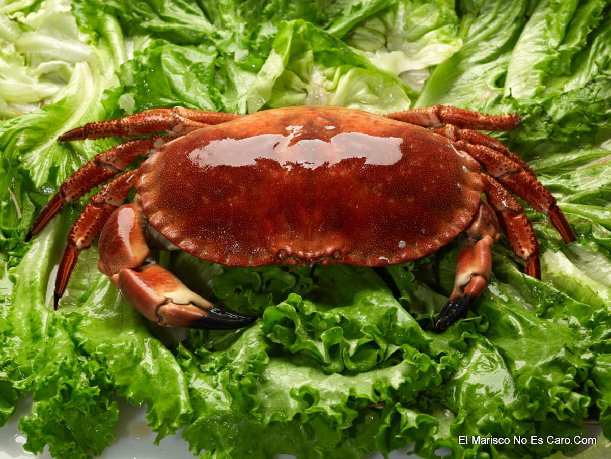 Recetas de pescado y marisco como abrir un buey de mar - Como cocinar un buey de mar ...