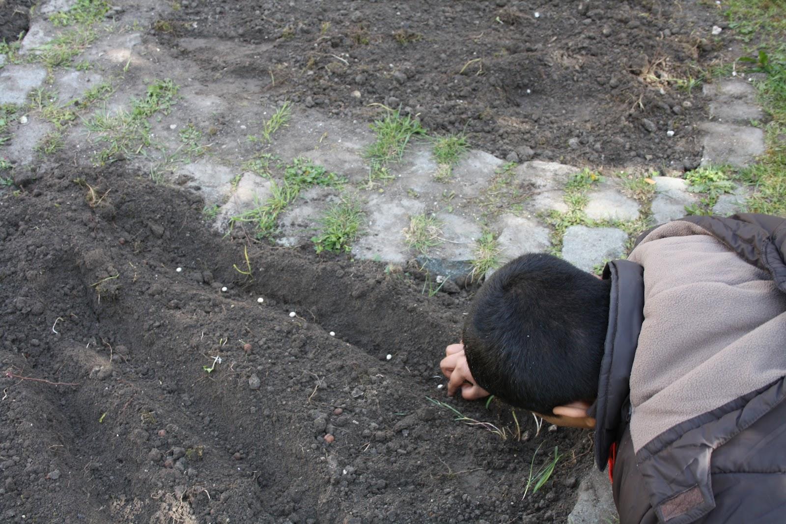 Plantation au jardin des cornichons for Plantation au jardin