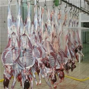 مقال عن بعض الأمراض المهمة والتي يمكن أن تنتقل عن طريق اللحوم في المسالخ