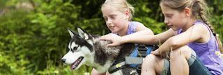 Urlaub mit Hund im Ferienpark