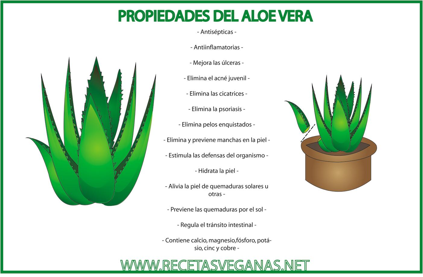 Planta aloe vera propiedades dietas de nutricion y alimentos - Como es la planta de aloe vera ...