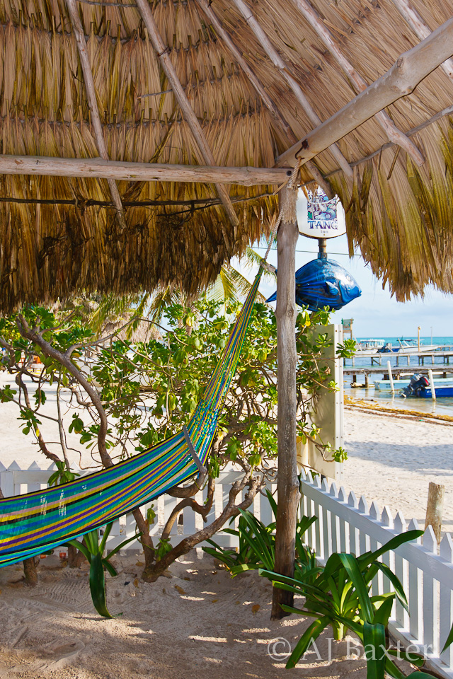 Hammock for One, Blue Tang Inn