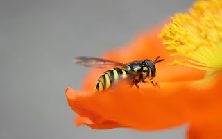 Si estas cansado o agotado el polen es ideal como suplemento