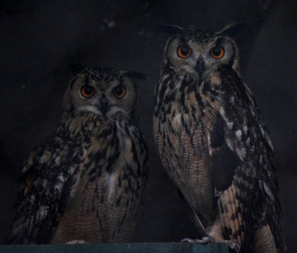 Owls at Katraj Zoo