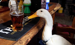 Too Much Pint Lands Unlikely Guest With Injuries, But It's A Duck