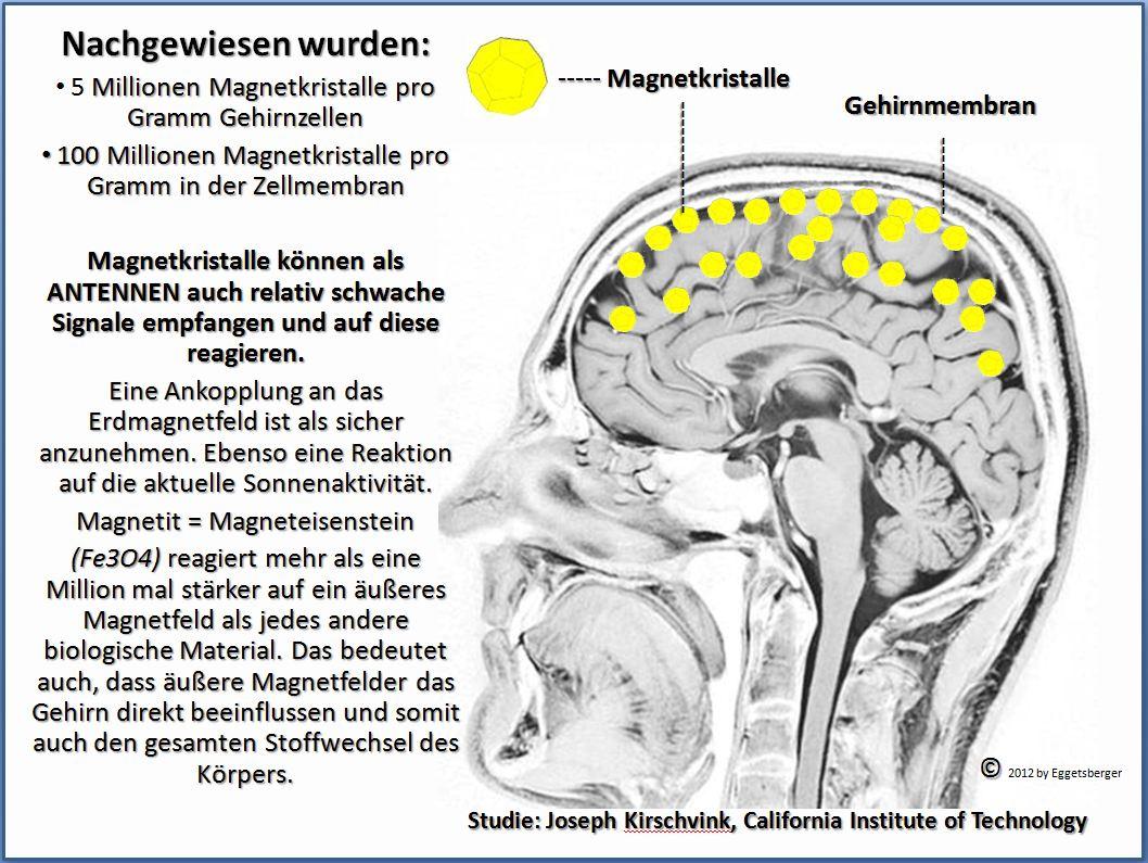 Eggetsberger-Info, Blogger, Blog: Antennen im menschlichen Gehirn ...