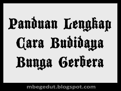 Budidaya Bunga Gerbera, Panduan Budidaya Bunga Gerbera, Budidaya Bunga Gerbera Yang Baik, Panduan Cara Budidaya Bunga Gerbera