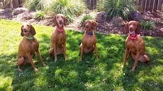 Lily, Rosie, Beckett, & half sister Stevie