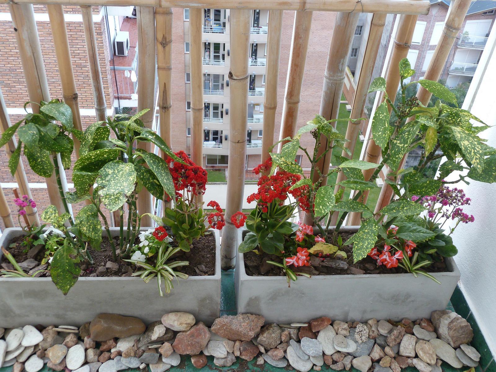 Los invito a pasear por mi jard n terrazas con flores - Plantas para terraza con mucho sol ...