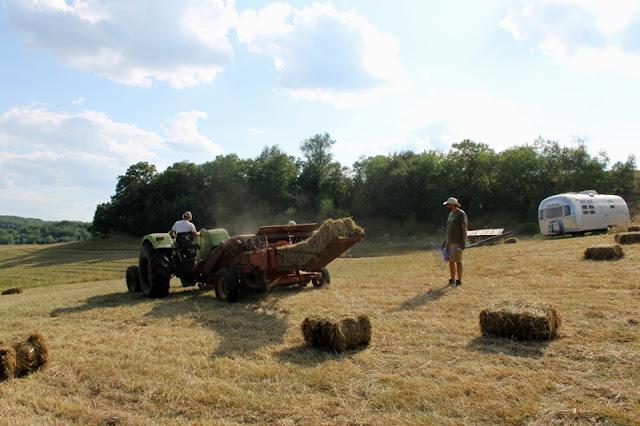 Papa Bear raking hay bales