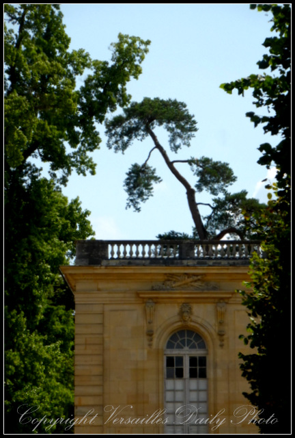Tree Grand Trianon Versailles