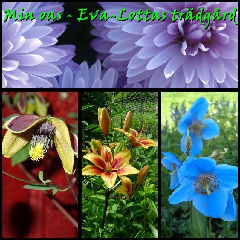Min oas - Eva-Lottas trädgård