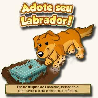 Adotar Labrador