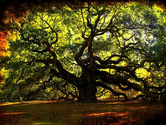 The Nark News Top 10 Amazing Trees