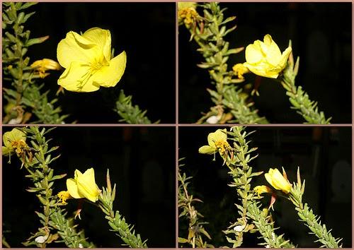 Bunga Kembang dikala azan dilaungkan