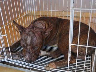 Animal também quebrou osso do focinho, diz veterinária (Foto: Jonatas Boni/ G1)