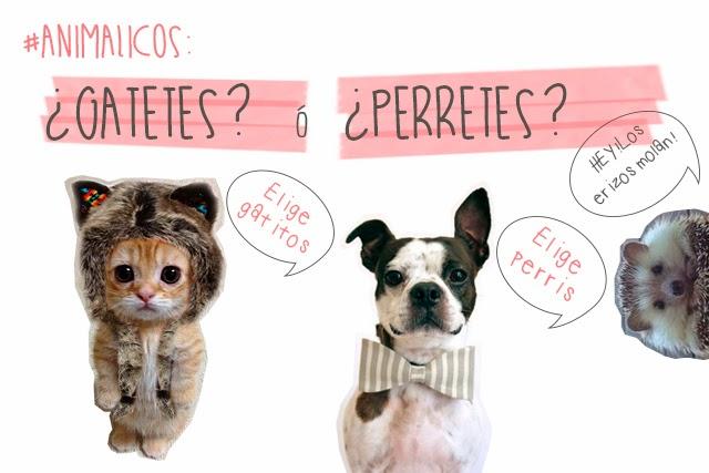 perritos gatitos mascotas erizos hermanas bolena