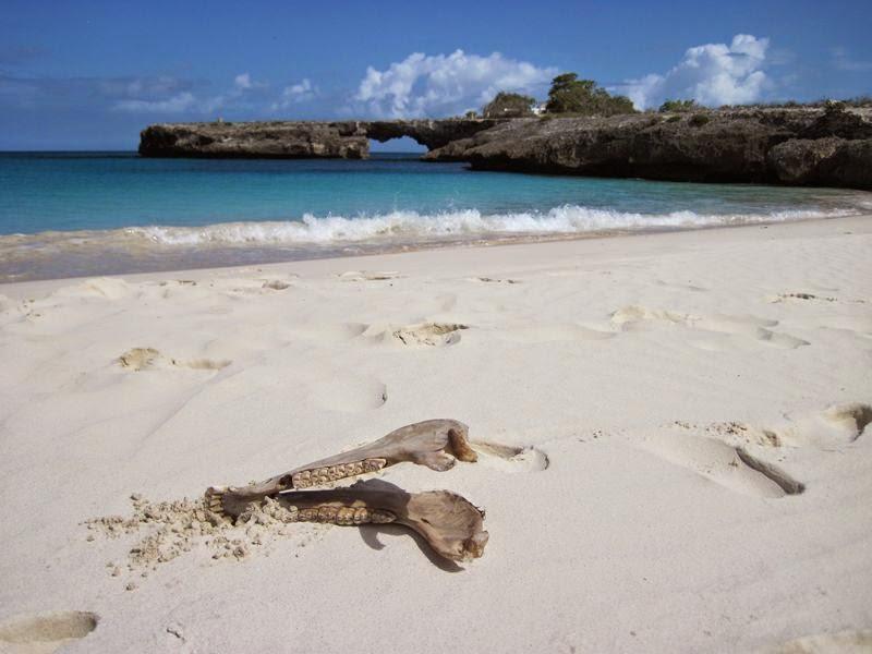 Souper rencontre corail vaudreuil