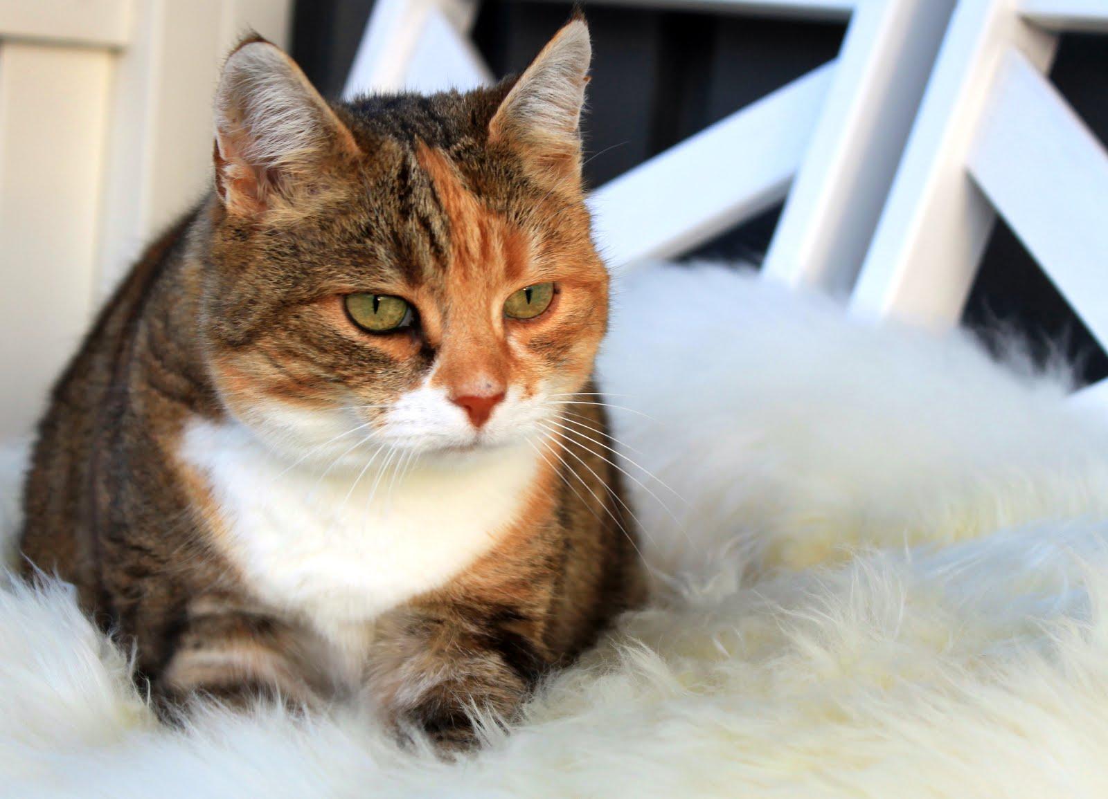 Katten Sara