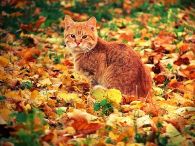 Картинки рыжий кот и осень