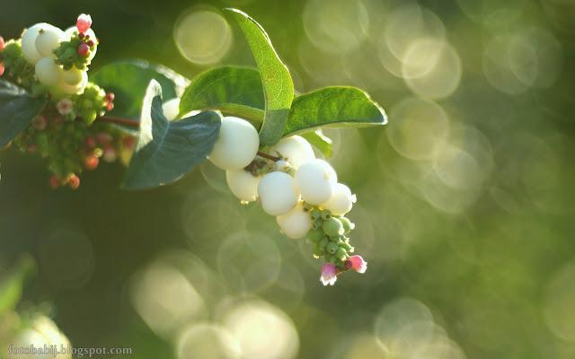 http://fotobabij.blogspot.com/2015/08/snieguliczka-i-soap-bubble-bokeh.html