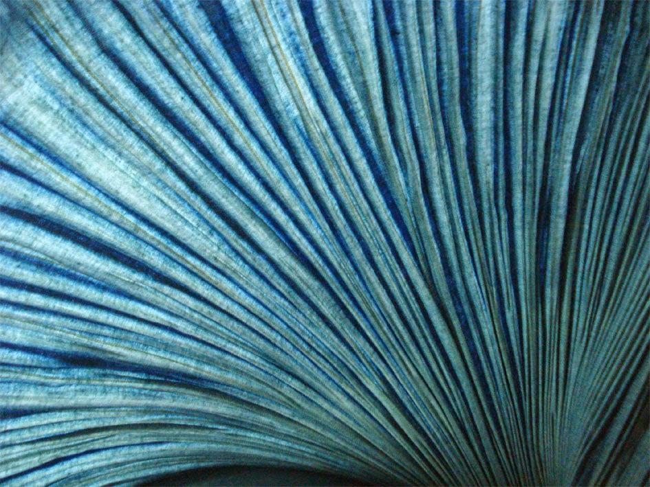 青は藍より出でて藍より青し Some pupils surpass their teachers.