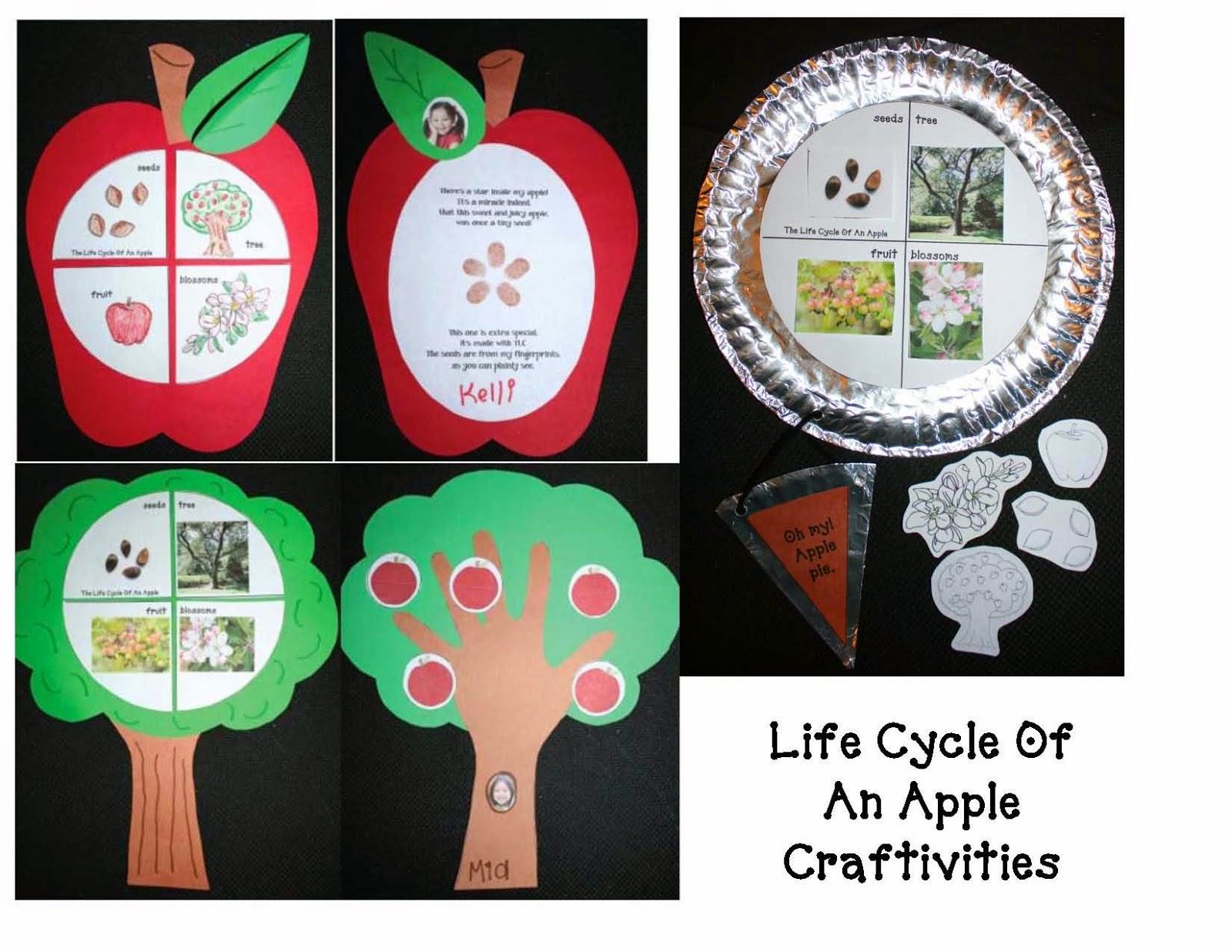 Life Cycle of an Apple Craftivities Classroom Freebies – Apple Life Cycle Worksheet