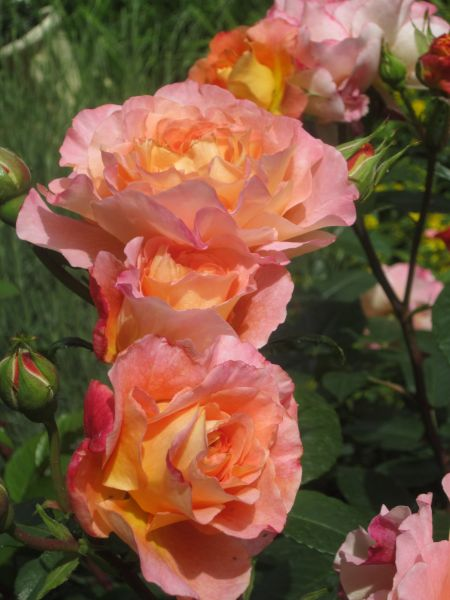 Blumen Zu Fronleichnam Blumenversand Edelweiss