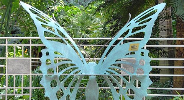 Butterflies at Krohn Conservatory.