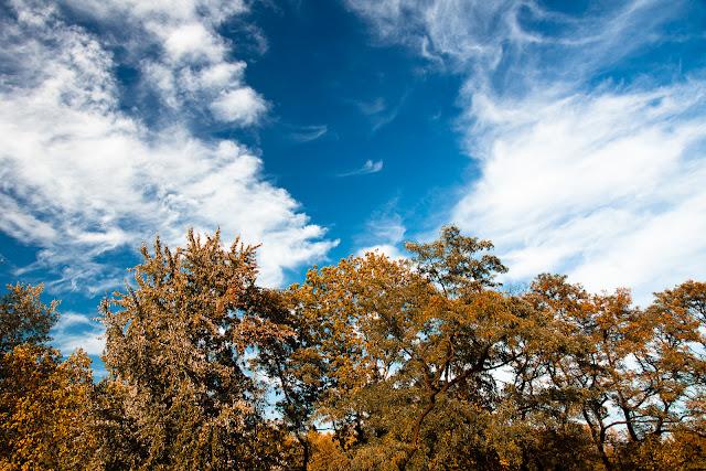 Jesienna fotografia krajobrazu. Niebo nad parkiem. fot. Łukasz Cyrus, Katowice